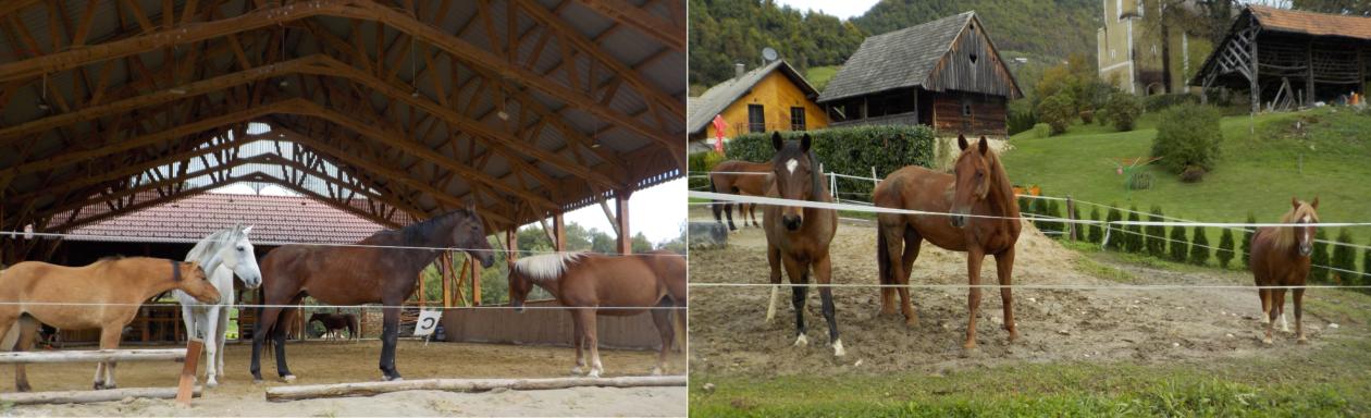 Konjeniški klub Vranje – Sevnica